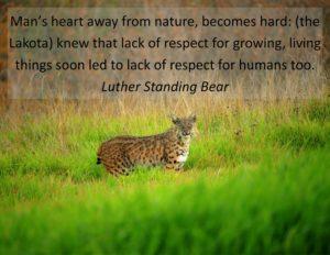 nature quotes7